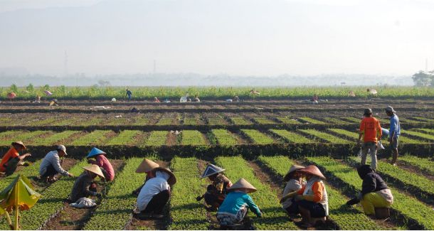 ASEAN's Predicted Export Growth with Europe in The Agricultural Market By 2030.